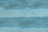Grote Pijlstormvogel / Great Shearwater / Puffinus gravis