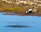 St Marks National Wildlife Preserve