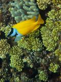 Tusa Dive ~ Cairns