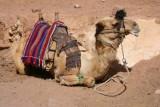 9396 Camel St Katherines.jpg