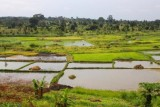 3980 Farmland near Jinja.jpg