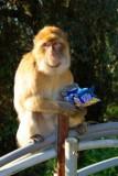 7980 Ape and peanuts.jpg