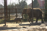 Riddle Elephant Preserve