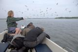 Martijn de Jonge laat met zijn 'birdingboat' de delta van de IJssel zien