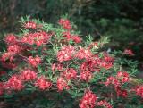 'Razzberry'