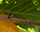 Birds of Manipal