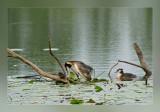 birds_around_the_water