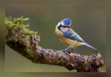 perching_birds