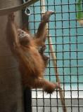 School Zoo Trip