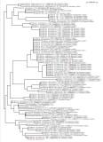 Probole Taxonomy Tree 4/2012