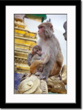 Monkeys at Swayambhunath Temples