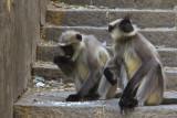Monkeys Mount Girnar.jpg
