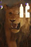 Stuffed lion Bhuj museum.jpg