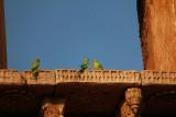 Champaner birds.jpg