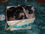 Snickers sleeping in her basket