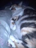 Spot cuddling up