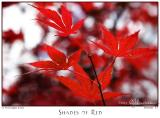 10Nov05 Shades of Red - 7246