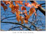 12Nov05 Last of the Fall Leaves - 7329