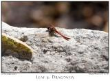 12Nov05 Leaf and Dragonfly - 7311