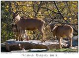 Roger Williams Zoo, RI