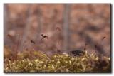 Coléoptère sur Mousse