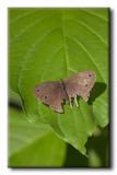 Papillon avec du vécu