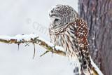 Birds in Vermont-winter
