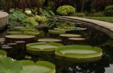 Atlanta Botanical Garden August 2011