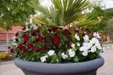 Atlanta Botanical Gardens Miriam 04-05-2011