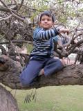An easily climbable tree