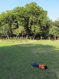 Rest time at Lodhi Garden