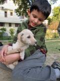 Next litter of Nizamuddin strays (2012)
