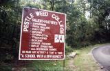 Pestle Weed College (near Dehra Dun)