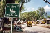 Wildlife Area (Rishikesh)