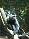 San Diego Zoo 7647.jpg