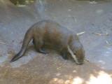 San Diego Zoo 7712.jpg