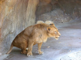 San Diego Zoo 7713.jpg