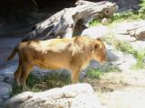 San Diego Zoo 7714.jpg