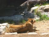 San Diego Zoo 7716.jpg