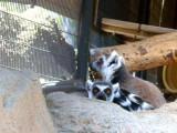 San Diego Zoo 7719.jpg