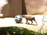 San Diego Zoo 7722.jpg