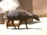 San Diego Zoo 7724.jpg