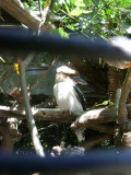 San Diego Zoo 7727.jpg