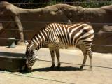 San Diego Zoo 7738.jpg