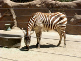 San Diego Zoo 7739.jpg