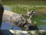 San Diego Zoo 7741.jpg