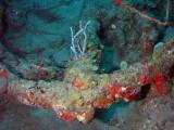 Anchor P3300156.jpg