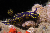 Tom Maher Reef
