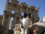 Library Cat at Ephesus