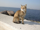 Izmir harbor cat, personality 2
